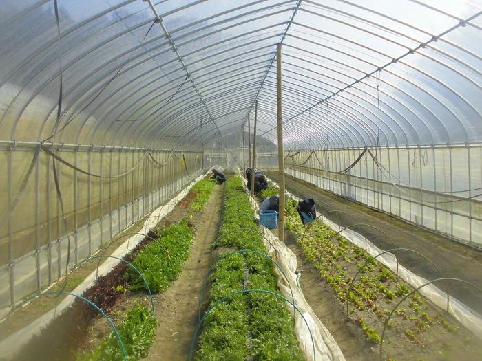 【農園】宇治田原を拠点に複数の農園を所有しております