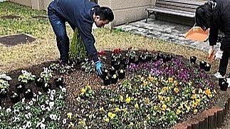 水耕栽培で育てた花は枚方市社協の花壇を彩ります。