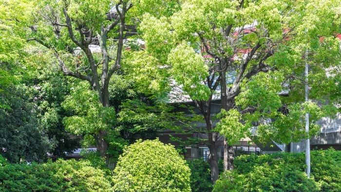 事務所から駒川中野駅を望む